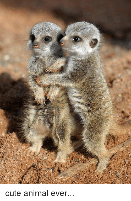 Cutest animals ever