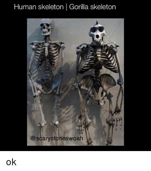 Gorilla skeleton vs. human skeleton