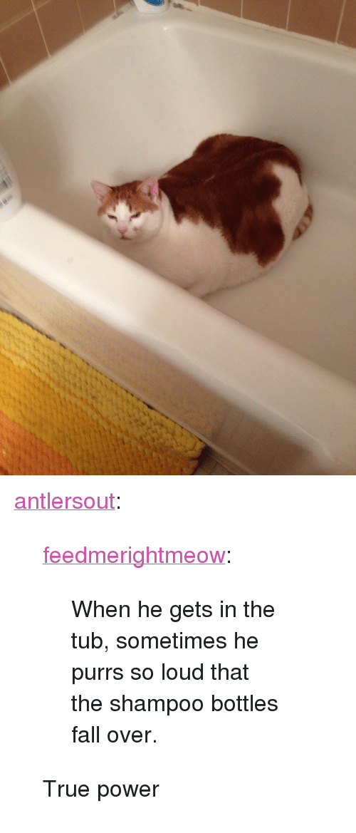 """fall over: <p><a class=""""tumblr_blog"""" href=""""http://antlersout.tumblr.com/post/80159659757/feedmerightmeow-when-he-gets-in-the-tub"""">antlersout</a>:</p><blockquote> <p><a class=""""tumblr_blog"""" href=""""http://feedmerightmeow.tumblr.com/post/80103191773/when-he-gets-in-the-tub-sometimes-he-purrs-so"""">feedmerightmeow</a>:</p> <blockquote> <p>When he gets in the tub, sometimes he purrs so loud that the shampoo bottles fall over.</p> </blockquote> <p>True power</p> </blockquote>"""