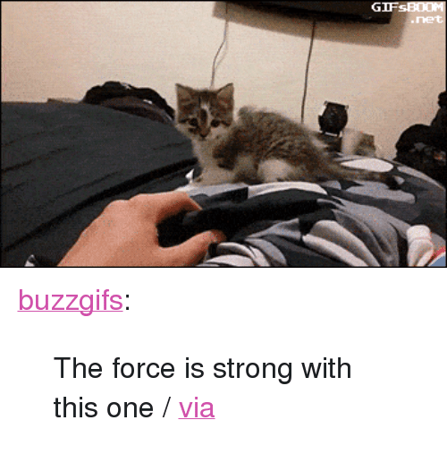 """Tumblr, Blog, and Http: <p><a class=""""tumblr_blog"""" href=""""http://buzzgifs.tumblr.com/post/139556402761"""">buzzgifs</a>:</p> <blockquote> <p>The force is strong with this one / <a href=""""http://ift.tt/1RQ2e0X"""">via</a></p> </blockquote>"""