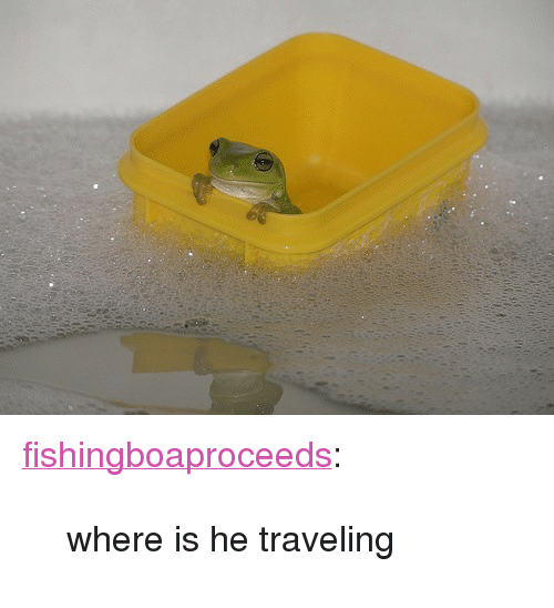 """Tumblr, Blog, and Http: <p><a class=""""tumblr_blog"""" href=""""http://fishingboaproceeds.tumblr.com/post/144176750683"""">fishingboaproceeds</a>:</p> <blockquote> <p>where is he traveling</p> </blockquote>"""