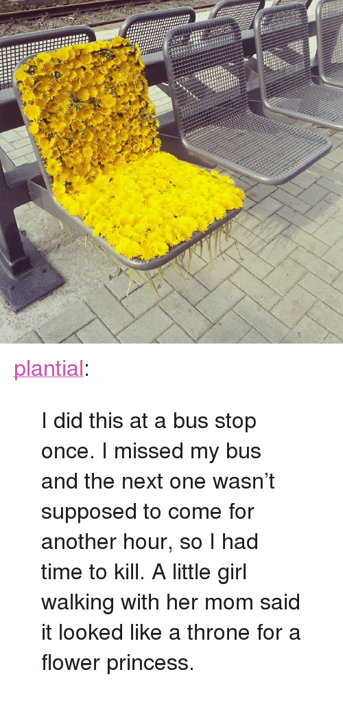 """Time To Kill: <p><a class=""""tumblr_blog"""" href=""""http://plantial.tumblr.com/post/85168136053/i-did-this-at-a-bus-stop-once-i-missed-my-bus-and"""">plantial</a>:</p> <blockquote> <p>I did this at a bus stop once. I missed my bus and the next one wasn't supposed to come for another hour, so I had time to kill. A little girl walking with her mom said it looked like a throne for a flower princess.</p> </blockquote>"""