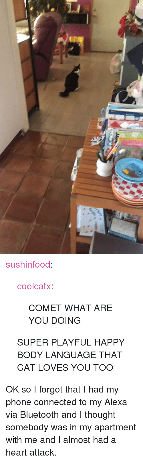 """I Almost Had A Heart Attack: <p><a href=""""http://sushinfood.tumblr.com/post/169253064755/coolcatx-comet-what-are-you-doing-super-playful"""" class=""""tumblr_blog"""">sushinfood</a>:</p> <blockquote> <p><a href=""""http://coolcatx.tumblr.com/post/169096863958/comet-what-are-you-doing"""" class=""""tumblr_blog"""">coolcatx</a>:</p> <blockquote><p>COMET WHAT ARE YOU DOING</p></blockquote> <p>SUPER PLAYFUL HAPPY BODY LANGUAGE THAT CAT LOVES YOU TOO</p> </blockquote>  <p>OK so I forgot that I had my phone connected to my Alexa via Bluetooth and I thought somebody was in my apartment with me and I almost had a heart attack.</p>"""