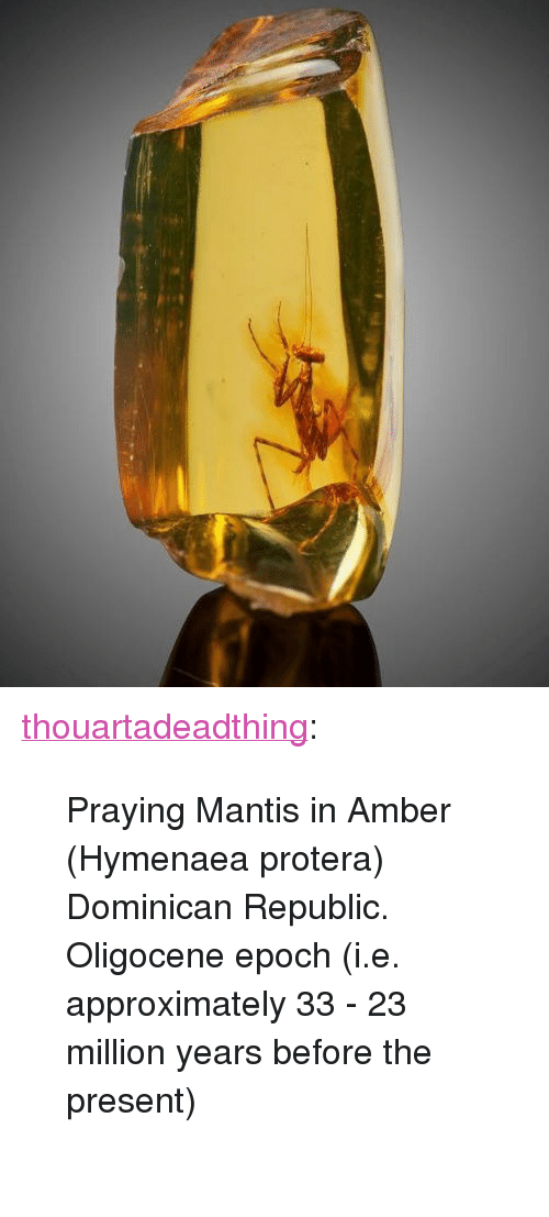 """Dominican: <p><a href=""""http://thouartadeadthing.tumblr.com/post/171489853917/praying-mantis-in-amber-hymenaea-protera"""" class=""""tumblr_blog"""" target=""""_blank"""">thouartadeadthing</a>:</p><blockquote><p>Praying Mantis in Amber (Hymenaea protera) Dominican Republic. Oligocene epoch (i.e. approximately 33 - 23 million years before the present)<br/><br/></p></blockquote>"""
