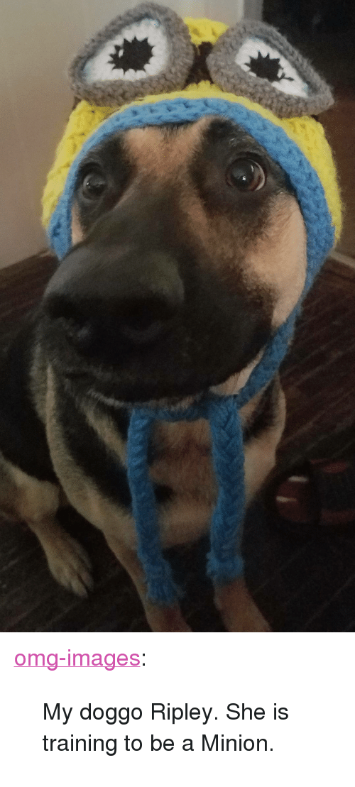 "a minion: <p><a href=""https://omg-images.tumblr.com/post/164724814397/my-doggo-ripley-she-is-training-to-be-a-minion"" class=""tumblr_blog"">omg-images</a>:</p>  <blockquote><p>My doggo Ripley. She is training to be a Minion.</p></blockquote>"