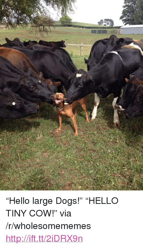 "large dogs: <p>&ldquo;Hello large Dogs!&rdquo; &ldquo;HELLO TINY COW!&rdquo; via /r/wholesomememes <a href=""http://ift.tt/2iDRX9n"">http://ift.tt/2iDRX9n</a></p>"