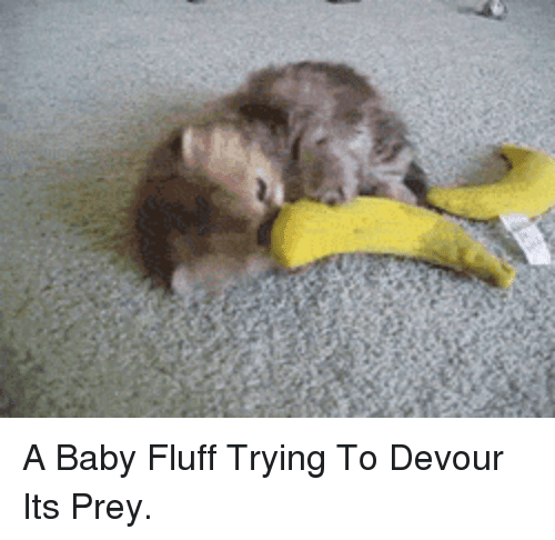devour: <p>A Baby Fluff Trying To Devour Its Prey.</p>
