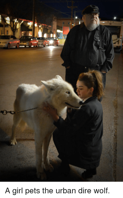 dire wolf: <p>A girl pets the urban dire wolf.</p>