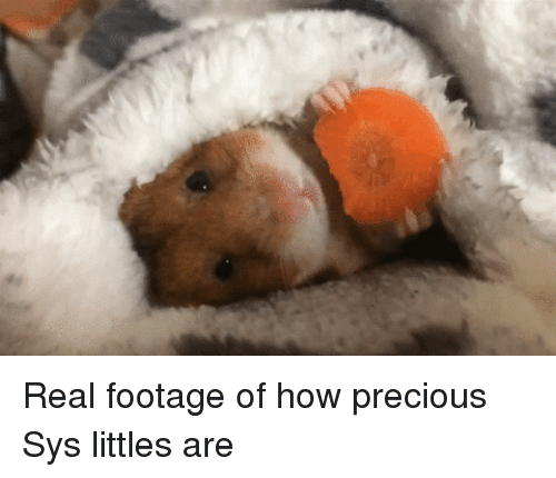 Littles: <p>Real footage of how precious Sys littles are</p>