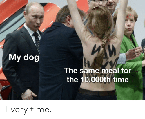 Dog The: ИИ  My dog  The same meal for  the 10,000th time Every time.