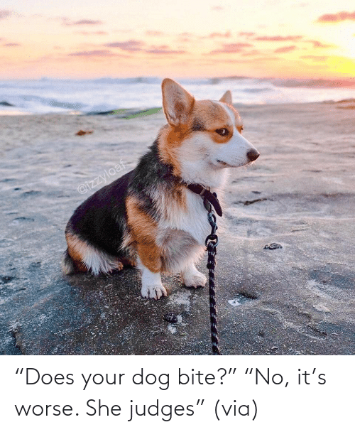 """Dog: """"Does your dog bite?"""" """"No, it's worse. She judges""""(via)"""