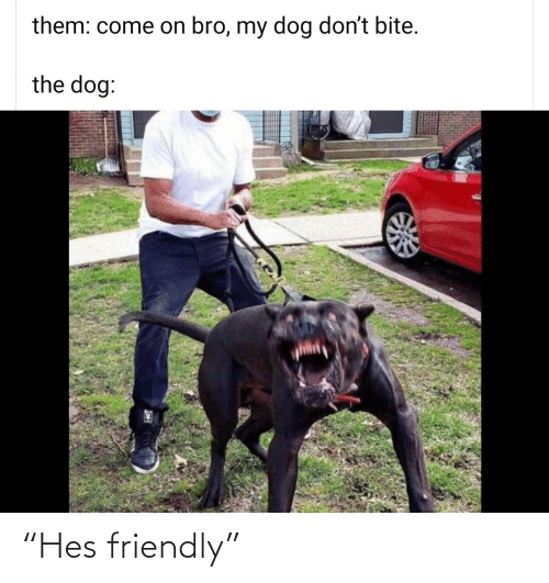 """hes: """"Hes friendly"""""""