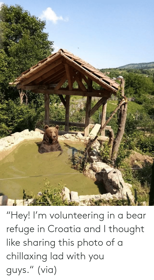"M: ""Hey! I'm volunteering in a bear refuge in Croatia and I thought like sharing this photo of a chillaxing lad with you guys."" (via)"