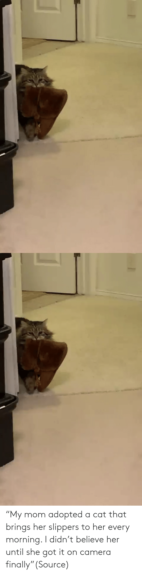 "Until: ""My mom adopted a cat that brings her slippers to her every morning. I didn't believe her until she got it on camera finally""(Source)"