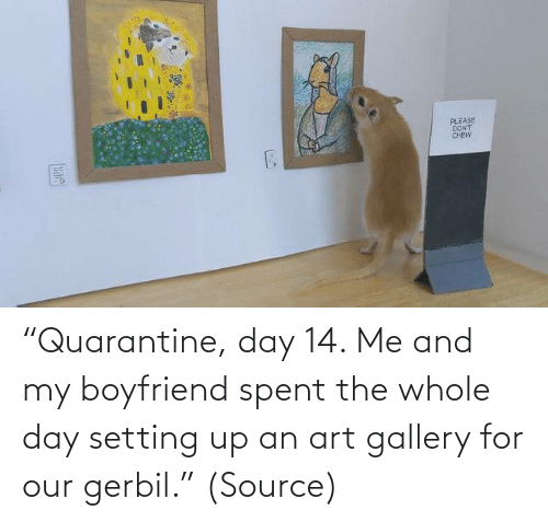 "art: ""Quarantine, day 14. Me and my boyfriend spent the whole day setting up an art gallery for our gerbil."" (Source)"