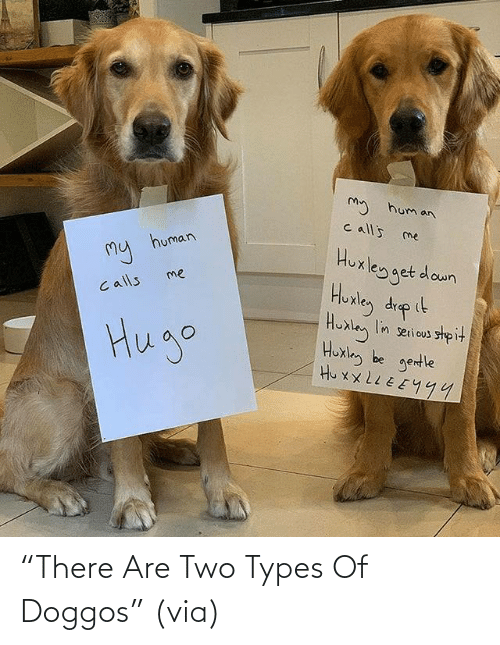 "two: ""There Are Two Types Of Doggos"" (via)"