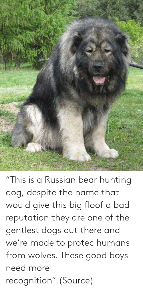 "boys: ""This is a Russian bear hunting dog, despite the name that would give this big floof a bad reputation they are one of the gentlest dogs out there and we're made to protec humans from wolves. These good boys need more recognition"" (Source)"