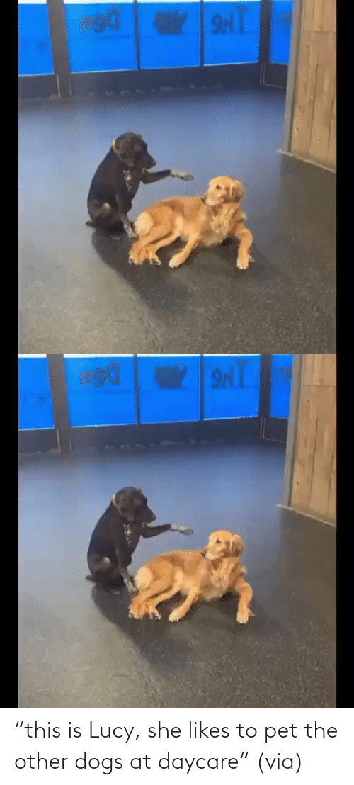 "Other: ""this is Lucy, she likes to pet the other dogs at daycare"" (via)"