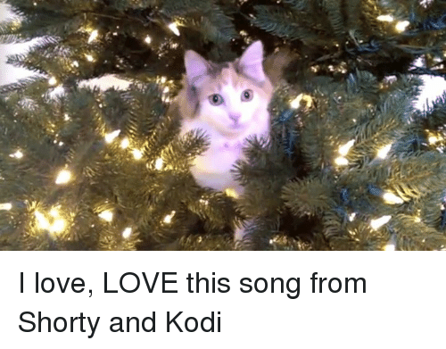 shorty's: の I love, LOVE this song from Shorty and Kodi