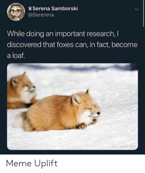 Meme, Foxes, and Can: .)曾Serena Samborski  @Sererena  While doing an important research, I  discovered that foxes can, in fact, become  a loaf. Meme Uplift