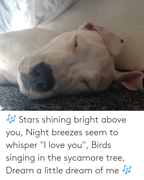 """I Love You: 🎶 Stars shining bright above you, Night breezes seem to whisper """"I love you"""", Birds singing in the sycamore tree, Dream a little dream of me 🎶"""