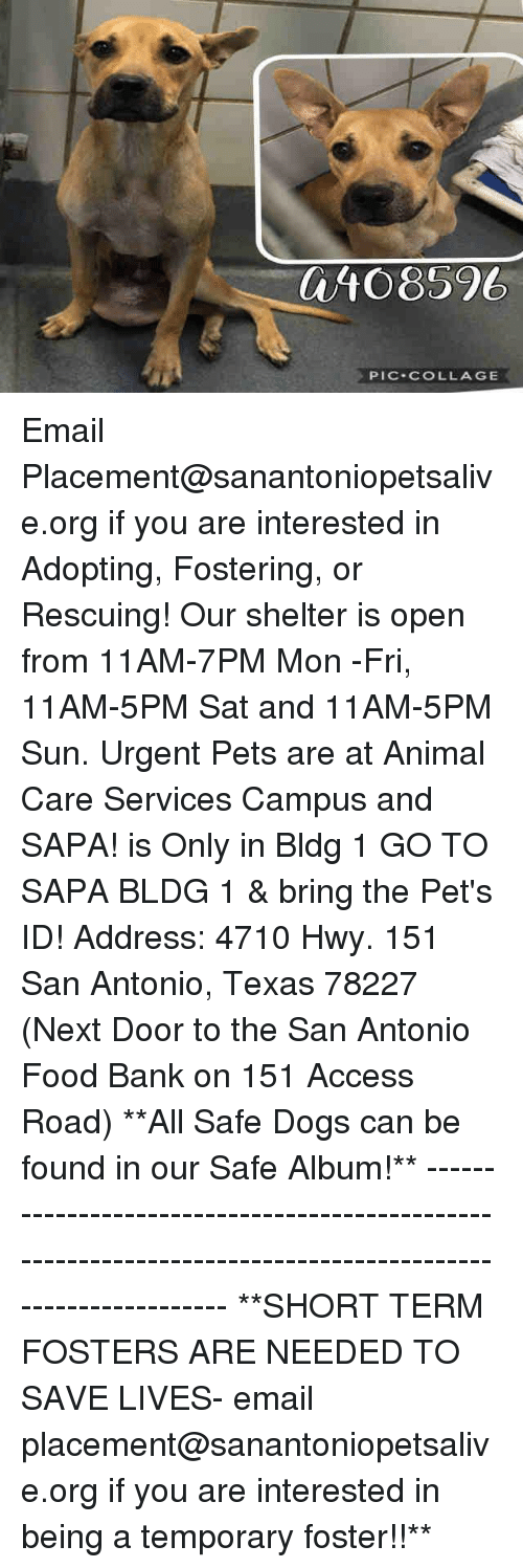 shortness: 0/10 8596  PIC-COLLAGE Email Placement@sanantoniopetsalive.org if you are interested in Adopting, Fostering, or Rescuing!  Our shelter is open from 11AM-7PM Mon -Fri, 11AM-5PM Sat and 11AM-5PM Sun.  Urgent Pets are at Animal Care Services Campus and SAPA! is Only in Bldg 1 GO TO SAPA BLDG 1 & bring the Pet's ID! Address: 4710 Hwy. 151 San Antonio, Texas 78227 (Next Door to the San Antonio Food Bank on 151 Access Road)  **All Safe Dogs can be found in our Safe Album!** ---------------------------------------------------------------------------------------------------------- **SHORT TERM FOSTERS ARE NEEDED TO SAVE LIVES- email placement@sanantoniopetsalive.org if you are interested in being a temporary foster!!**