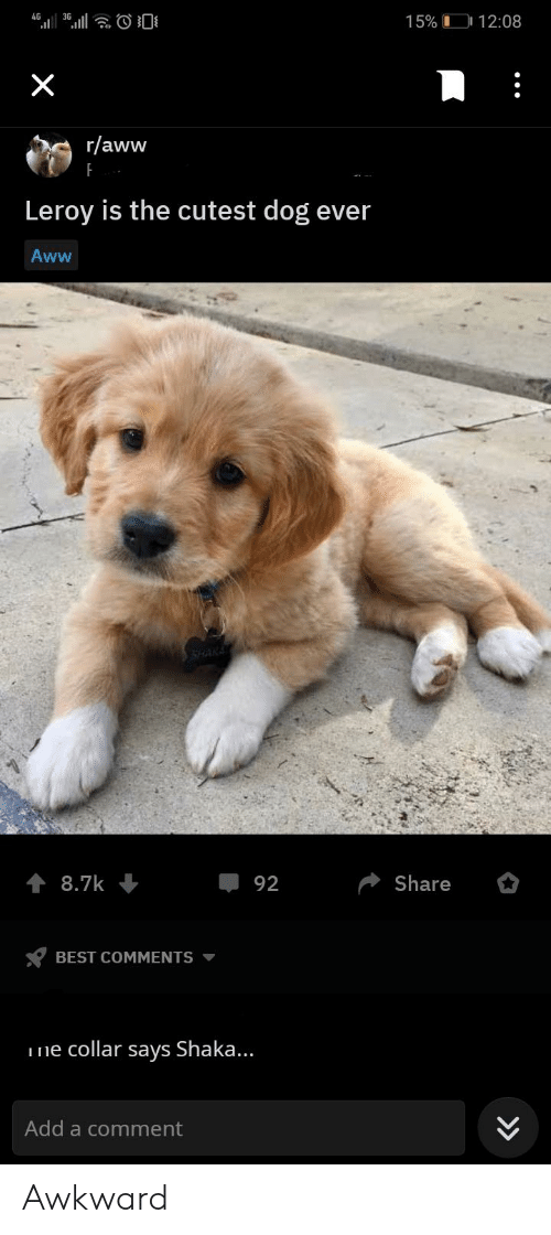 Aww, Awkward, and Best: 0  4G  15% 12:08  X  r/aww  Leroy is the cutest dog ever  Aww  SHAKE  Share  8.7k  92  BEST COMMENTS  ne collar says Shaka...  Add a comment Awkward