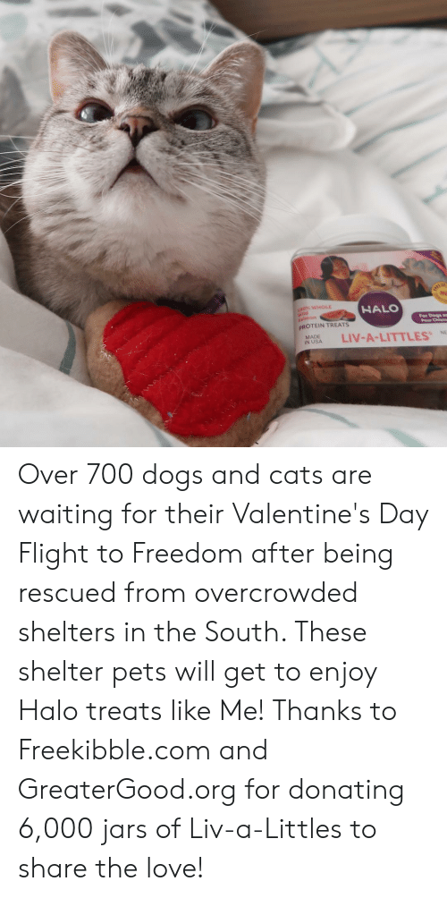 Shelters: 00% WHOLE  HALO  id  For Dogs a  Pour Chienm  PROTEIN TREATS  NASA LIV-A-LITTLES  MADE  %NE Over 700 dogs and cats are waiting for their Valentine's Day Flight to Freedom after being rescued from overcrowded shelters in the South. These shelter pets will get to enjoy Halo treats like Me! Thanks to Freekibble.com and GreaterGood.org for donating 6,000 jars of Liv-a-Littles to share the love!