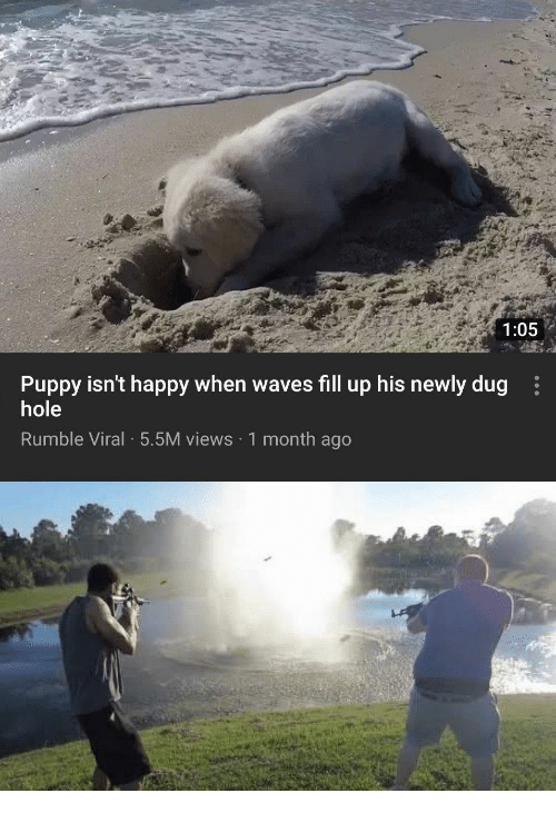 Waves, Happy, and Puppy: 1:05  Puppy isn't happy when waves fill up his newly dug  hole  Rumble Viral 5.5M views 1 month ago
