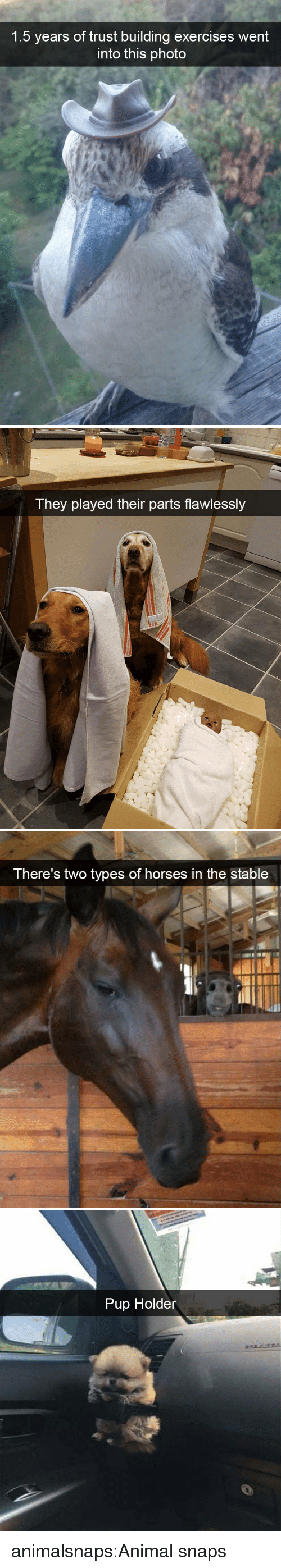Exercises: 1.5 years of trust building exercises went  into this photo   They played their parts flawlessly   There's two types of horses in the stable   Pup Holder animalsnaps:Animal snaps