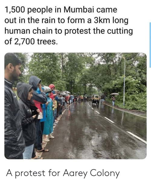 chain: 1,500 people in Mumbai came  out in the rain to form a 3km long  human chain to protest the cutting  of 2,700 trees. A protest for Aarey Colony