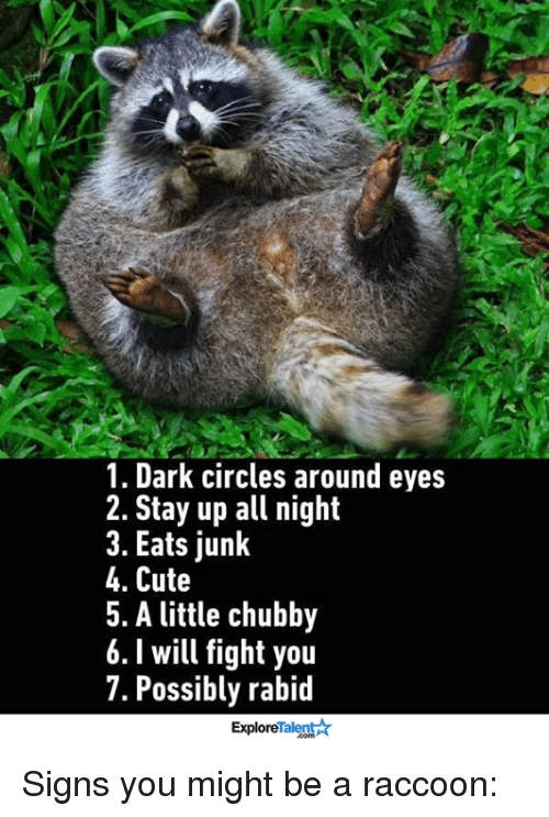 talent explore: 1. Dark circles around eyes  2. Stay up all night  3. Eats junk  4. Cute  5. A little chubby  6. will fight you  7. Possibly rabid  Talent  Explore Signs you might be a raccoon: