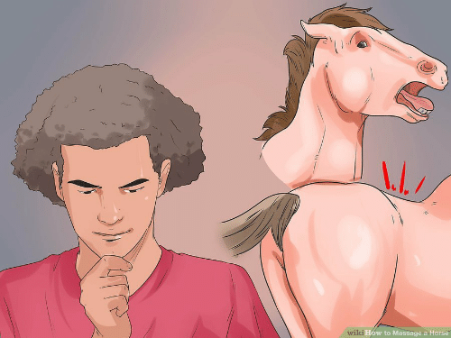 Massage, Horse, and How To: 1  How to Massage a Horse