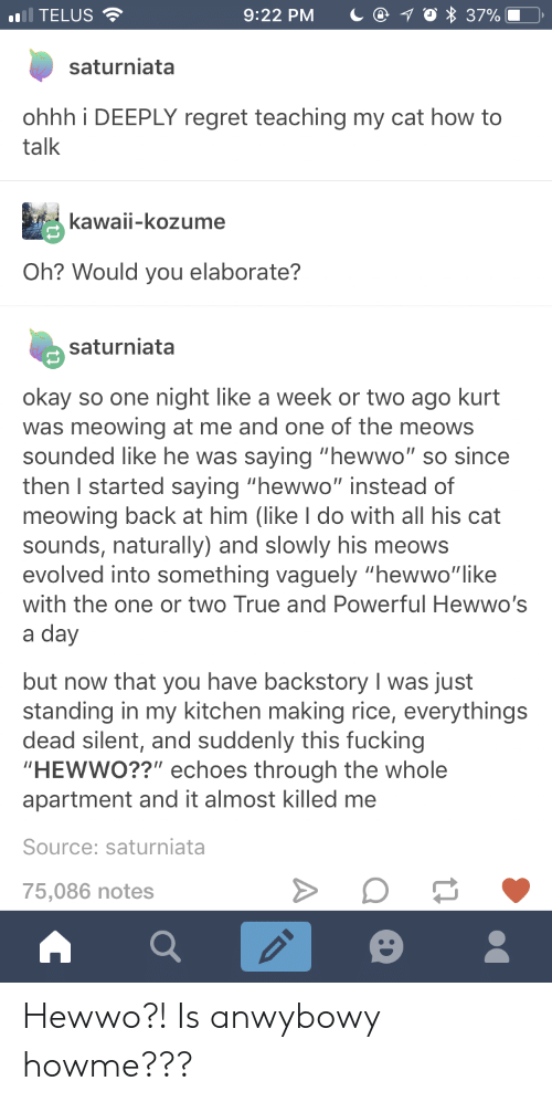 """Kurt: ),  .1 TELUS  9:22 PM  37%  saturniata  ohhh i DEEPLY regret teaching my cat how to  talk  kawaii-kozume  Oh? Would you elaborate?  saturniata  okay so one night like a week or two ago kurt  was meowing at me and one of the meows  sounded like he was saying """"hewwo"""" so since  then I started saying """"hewwo"""" instead of  meowing back at him (like I do with all his cat  sounds, naturally) and slowly his meows  evolved into something vaguely """"hewwo""""like  with the one or two True and Powerful Hewwo's  a day  but now that you have backstory I was just  standing in my kitchen making rice, everythings  dead silent, and suddenly this fucking  HEWWO??"""" echoes through the whole  apartment and it almost killed me  Source: saturniata  75,086 notes Hewwo?! Is anwybowy howme???"""