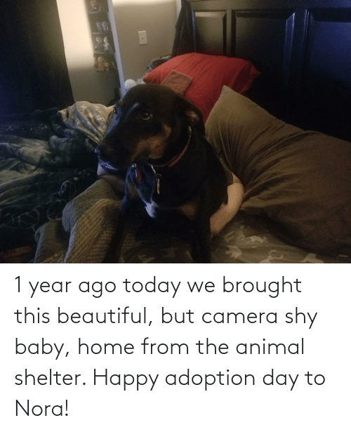 nora: 1 year ago today we brought this beautiful, but camera shy baby, home from the animal shelter. Happy adoption day to Nora!