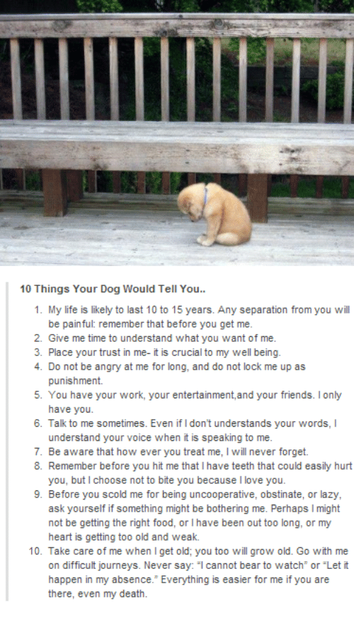 "Understandment: 10 Things Your Dog Would Tell You..  1. My life is likely to last 10 to 15 years. Any separation from you will  be painful: remember that before you get me.  2. Give me time to understand what you want of me.  3. Place your trust in me- it is crucial to my well being.  4. Do not be angry at me for long, and do not lock me up as  punishment.  5. You have your work, your entertainment, and your friends. lonly  have you.  6. Talk to me sometimes. Even if Idon't understands your words, l  understand your voice when it is speaking to me.  7. Be aware that how ever you treat me, l will never forget.  8. Remember before you hit me that l have teeth that could easily hurt  you, but choose not to bite you because l love you.  9. Before you scold me for being uncooperative, obstinate, or lazy,  ask yourself if something might be bothering me. Perhaps l might  not be getting the right food, or l have been out too long, or my  heart is getting too old and weak.  10. Take care of me when get old; you too will grow old. Go with me  on difficult journeys. Never say  cannot bear to watch or ""Let it  happen in my absence. Everything is easier for me if you are  there, even my death."