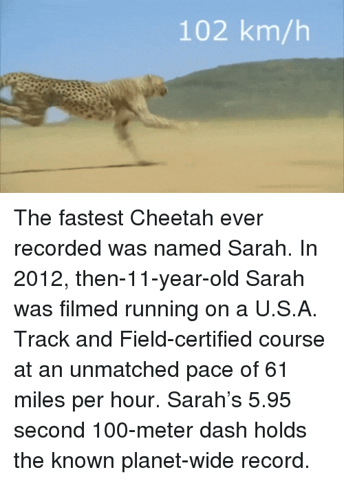 Anaconda, Cheetah, and Record: 102 km/h The fastest Cheetah ever recorded was named Sarah. In 2012, then-11-year-old Sarah was filmed running on a U.S.A. Track and Field-certified course at an unmatched pace of 61 miles per hour. Sarah's 5.95 second 100-meter dash holds the known planet-wide record.