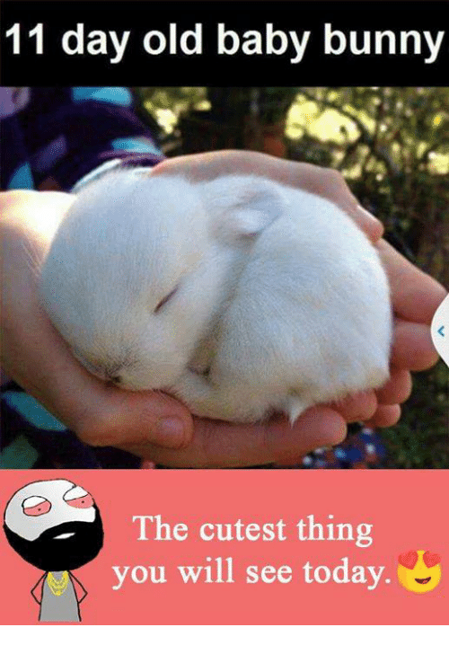 baby bunnies: 11 day old baby bunny  a The cutest thing  you will see today.