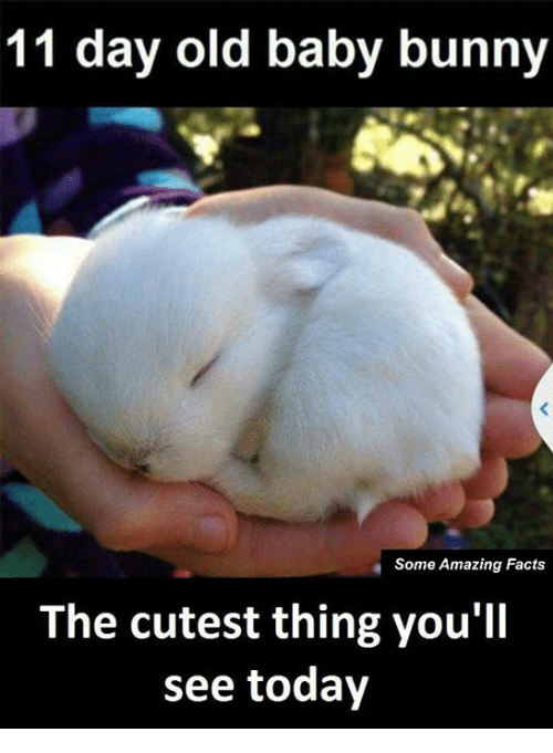 baby bunnies: 11 day old baby bunny  Some Amazing Facts  The cutest thing you'll  see today