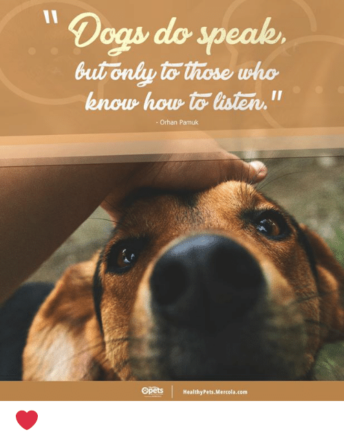 Dogs, Memes, and How To: 11  Dogs do speak  but only to those who  know how to listen  11  Orhan Pamuk  Opets  HealthyPets.Mercola.com ❤️