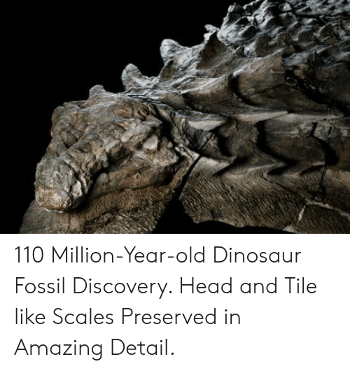 Scales: 110 Million-Year-old Dinosaur Fossil Discovery. Head and Tile like Scales Preserved in Amazing Detail.