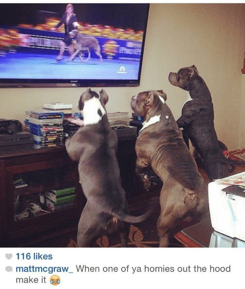 The Hood, Hood, and One: 116 likes  mattmcgraw_When one of ya homies out the hood  make it