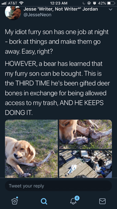 Bones, Dank, and Deer: 12:23 AM  AT&T  Jesse 'Writer, Not Writer*' Jordan  @JesseNeon  My idiot furry son has one job at night  bork at things and make them go  away.Easy, right?  HOWEVER, a bear has learned that  my furry son can be bought. This is  the THIRD TIME he's been gifted deer  bones in exchange for being allowed  access to my trash, AND HE KEEPS  DOING IT.  Tweet your reply  4