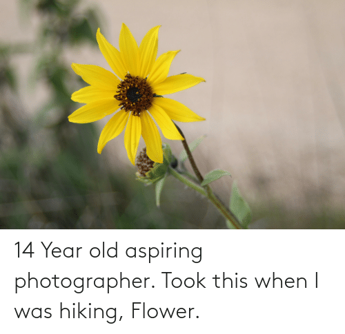 14 Year Old: 14 Year old aspiring photographer. Took this when I was hiking, Flower.