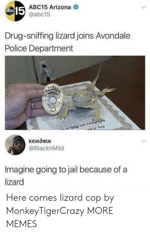 Dank, Jail, and Memes: 15  ABC15 Arizona  @abc15  Drug-sniffing lizard joins Avondale  Police Department  @BlacknMild  Imagine going to jail because of a  lizard Here comes lizard cop by MonkeyTigerCrazy MORE MEMES