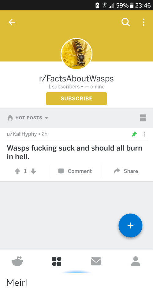 burn in hell: 159% 23:46  r/FactsAboutWasps  1 subscribers-online  SUBSCRIBE  HOT POSTS  u/KaliHyphy 2h  Wasps fucking suck and should all burn  in hell.  Comment  Share Meirl