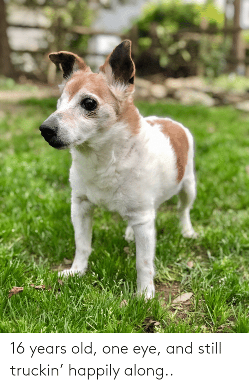 16 years old: 16 years old, one eye, and still truckin' happily along..