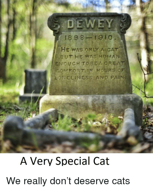 creat: 1898-1910  HE WAS ONLY A CAT  BUT HE WAS HUMA)N  ENOUGH TO BEA CREAT  ONELINESS AND PAIN  FORT IN  HOURS O  A Very Special Cat <p>We really don&rsquo;t deserve cats</p>