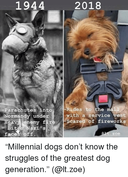 "normandy: 1944  2018  Rides to the ma1L  -Parachutes into  Normandy under  Heavy enemy fiz  with a service vest  Scared of fireworks  i t  faces OF  -B  Nazis  zoe ""Millennial dogs don't know the struggles of the greatest dog generation."" (@lt.zoe)"