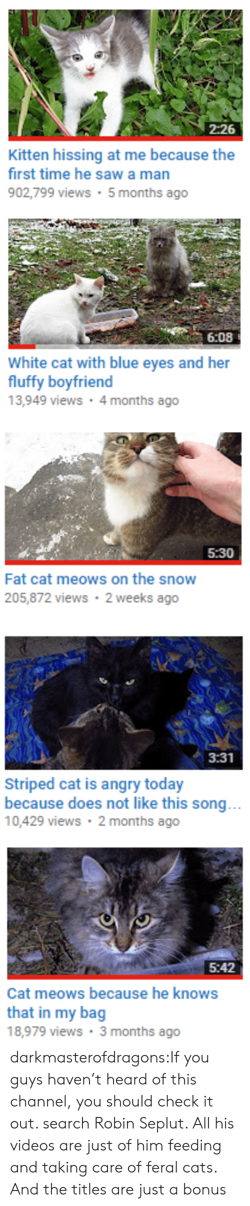 Cats, Tumblr, and Videos: 2:26  Kitten hissing at me because the  first time he sawa man  902,799 views 5 months ago   6:08  White cat with blue eyes and her  fluffy boyfriend  13,949 views 4 months ago   5:30  Fat cat meows on the snow  205,872 views 2 weeks ago   3:31  Striped cat is angry today  because does not like this song...  10,429 views 2 months ago   5:42  Cat meows because he knows  that in my bag  18,979 views 3 months ago darkmasterofdragons:If you guys haven't heard of this channel, you should check it out. search Robin Seplut. All his videos are just of him feeding and taking care of feral cats. And the titles are just a bonus